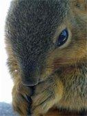 How Squirrels Survive in Winter
