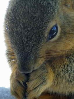 Squirrels teach us to be thrifty and how to find things in winter.