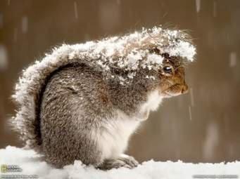 squirrels teach us skills of resourcefulness and thrift