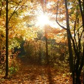 Forest Path Fall Yellow Color (jpg)