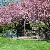 Scarsdale Vets Memorial Garden (jpg)