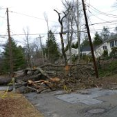 Storm Damage Tree in Road (jpg)