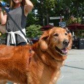 Dog at Sidewalk Sale (jpg)