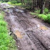 Muddy Forest Access Dirt Road (jpg)