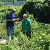 Field Work on Invasive Plants (jpg)
