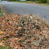 Violation - Leaf Pile in Street