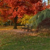Delima Park in Fall (jpg)