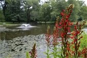 Library Pond with Red Flower (jpg)
