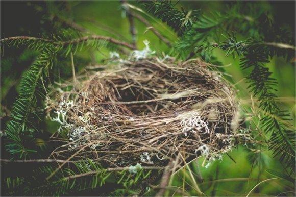 Birds's Nest