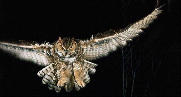 Owls are a feared night predator